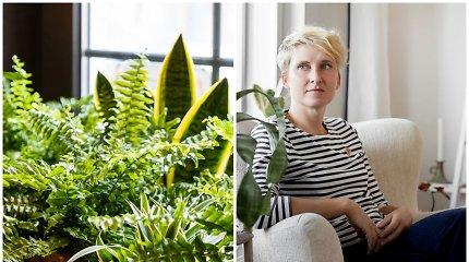 Kolekcininkės R.Tomingas namuose – iki 200 kambarinių augalų: pranašauja paparčių atgimimą