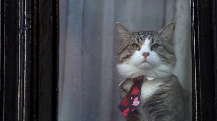 J.Assange'o katinas gyvas ir sveikas, bet ne su šeimininku