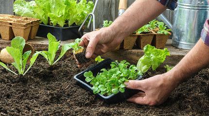 Ekspertai pataria, kaip teisingai pasirinkti trąšas ir substratus: padės gausinti derlių