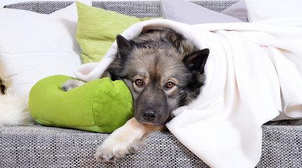 Kiek laiko saugu šunį palikti namuose vieną?