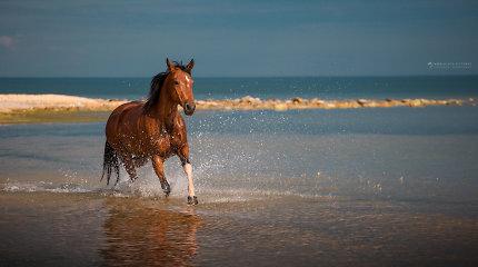 Ar gali būti, kad Vytautas Didysis išties girdė žirgus Juodojoje jūroje?