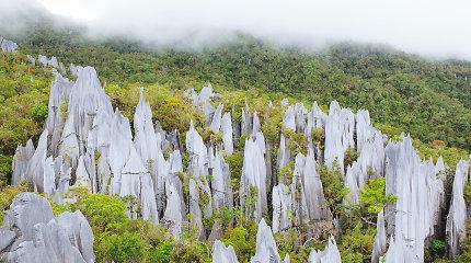 Kelionė kalnais ir džiunglių takais: įspūdingiausi Malaizijos nacionaliniai parkai