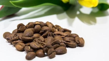 Mokslinė fantastika: automobilių dalis gamins iš kavos pupelių odelių