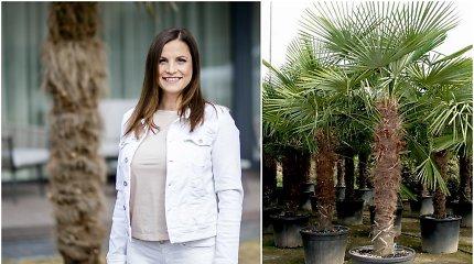 """Sandra pirmoji į Lietuvą atvežė palmes, galinčias žiemoti lauke: """"Nebijome naujovių. Norime puošti savo šalį"""""""
