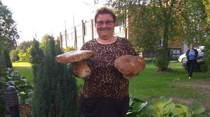 Aristavietė rado grybų karalių – baravykas svėrė 1,651 kg
