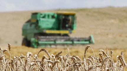 Europos Komisija: ES grūdų derlius šiemet – 8 proc. solidesnis