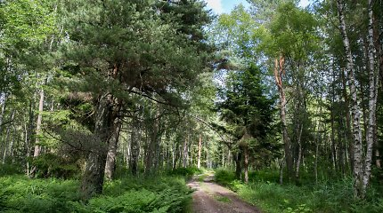Parlamentarai ragina įvesti saugiklius ir miško žemei