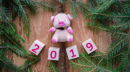 """Astrologė P.Kelertienė apie Kiaulės metus: """"Tai didžiojo džiaugsmo metai"""""""