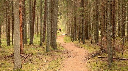 Vainagių miško pažintinis takas – čia pirmas kąsnis skaniausias