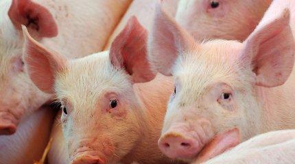 Pietų Korėja patvirtino pirmąjį afrikinio kiaulių maro atvejį