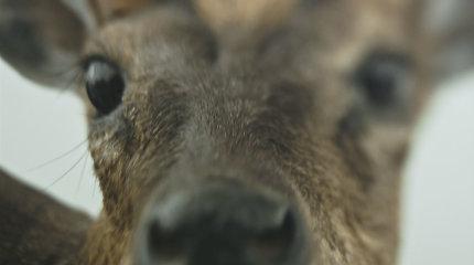 """Klausimus keliančio kūrinio džiaugsmas. Filmas """"Animus animalis (istorija apie žmones, žvėris ir daiktus)"""""""