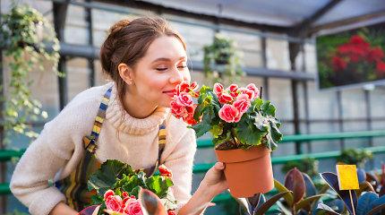 15 geriausių vienmečių gėlių, kurias turėtumėte pasodinti savo sode