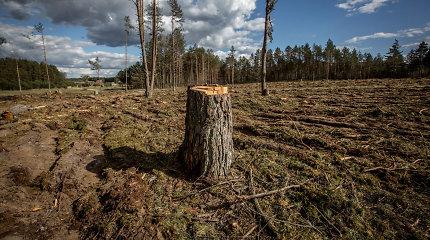 Seimas įtvirtino: jokių didelių miško pirkėjų, riba – 1500 hektarų
