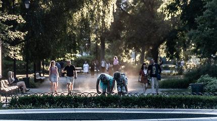 Mokslininkė ragina atsižvelgti į rekomendacijas: miestų taršos problemą padeda spręsti medžiai