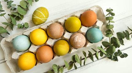 Ar sveika valgyti kiaušinius: tiesa ir mitai apie juose esantį cholesterolį