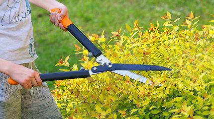 10 mažai priežiūros reikalaujančių augalų, kurie papuoš jūsų sodą