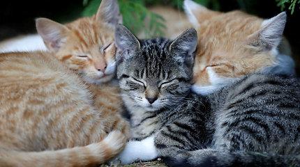 Kaip teisingai glostyti katiną? Mokslininkai turi savo patarimų