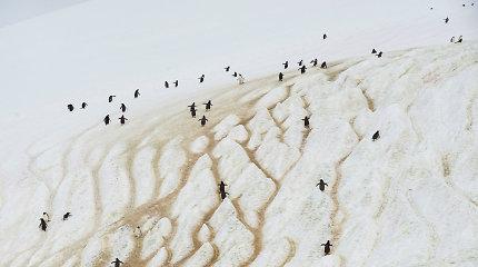 JT tikrina Antarktyje galimai užfiksuotą šilumos rekordą