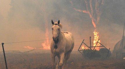 Australijos gaisrai į atmosferą išmetė daugiau teršalų nei 100 valstybių kartu sudėjus