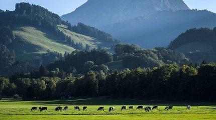 Šveicarai išrado niekur kitur nevartojamą kalbą