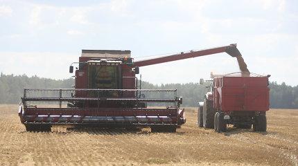 Javapjūtė: nukulta du trečdaliai ploto, derlius nedžiugina