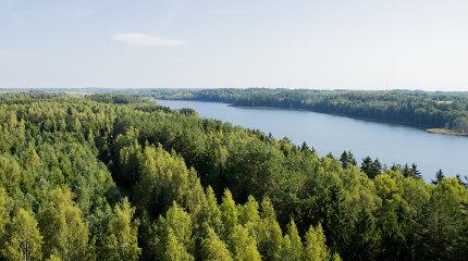 STT: Miškų ir Saugomų teritorijų įstatymų pakeitimai – galima aplinkosauginė žala ir prielaidos korupcijai
