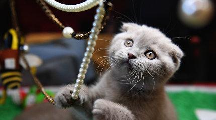 Kačių TOP 10: gražiausios, brangiausios ir populiariausios veislės