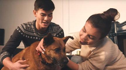 Beglobiai gyvūnai tapo kalėdinio filmuko herojais: jautri socialinė reklama žaibiškai plinta internete