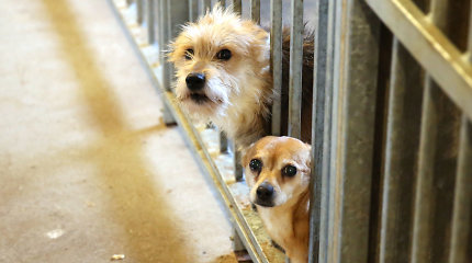 Į šiukšlių konteinerį prie Alytaus kapinių sumesta 10 šuniukų, 8 iš jų rasti jau negyvi
