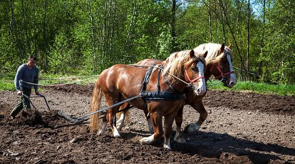 Pakruojo dvaro vasaros sezono atidaryme – sunkiųjų Lietuvos arklių varžybos