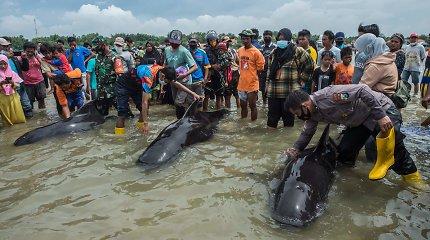 Indonezijoje nugaišo dešimtys ant seklumos užplaukusių delfinų