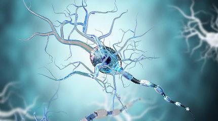 Miego metu smegenyse suaktyvėja imuninės ląstelės. Ką jos ten veikia?