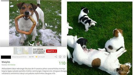 Teisėsaugai žinoma kaunietė rankų nenuleido – internete ir toliau prekiauja šunimis