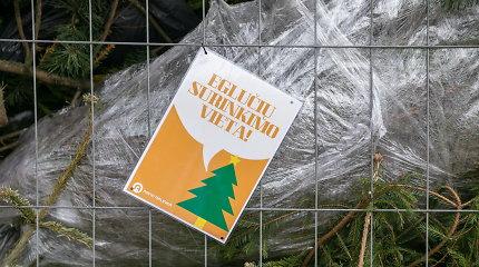 Vilniuje – 90 aikštelių nupuoštoms eglėms ir Kalėdų miškas – gyvoms
