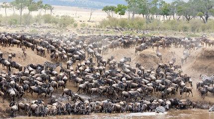 Tanzanijos grožis: nuo beribių savanų iki didingojo Kilimandžaro