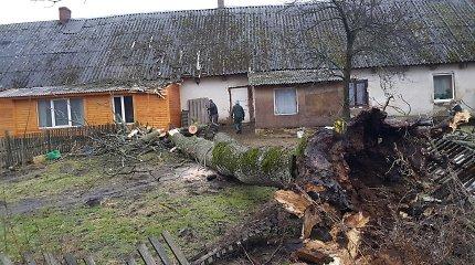 Petrelių kaime vėtra su šaknimis išvertė seną uosį – medis krito ant namo