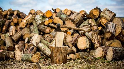 Vyriausybė patvirtino didesnę miškų kirtimo normą