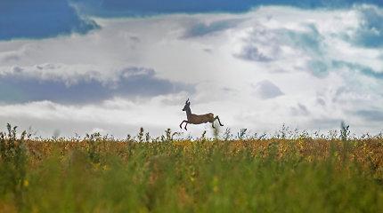 Ventos regioninio parko vertybės