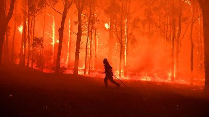 Degantys Australijos miškai padėjo demaskuoti melą apie klimato kaitą: ar tikrai?
