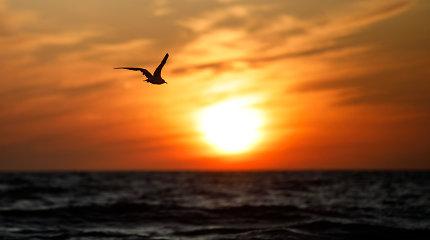 TEA: jūros vėjas gali tapti didžiausiu Europos elektros šaltiniu