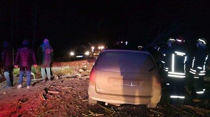"""Panevėžio rajone automobilis """"Peugeot"""" trenkėsi į ant kelio nuvirtusį medį"""