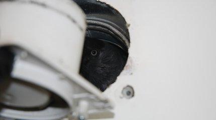 Neprašyta viešnia vilniečių vonioje