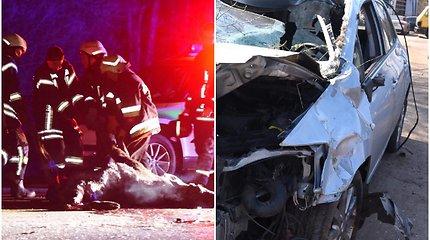 Naktį į greitkelį įšokęs briedis žūdamas sukėlė sumaištį: sudaužytos 4 mašinos, sužeistas žmogus