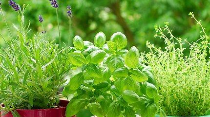 Perakredituoti sėklų kokybės tyrimai