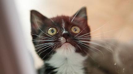 Benamės katės klaipėdietį varo iš proto