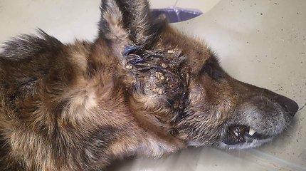 Brisiaus galas: globėjai kovoja dėl miške rasto šunelio gyvybės