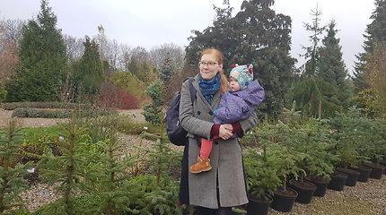 Kalėdos jau čia pat: Klaipėdoje Botanikos sodas nuomoja kalėdines eglutes
