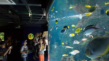 Jūrų muziejus savaitgalį skiria meilei