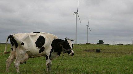 Vėjo jėgainių statyba įklimpo biurokratijoje
