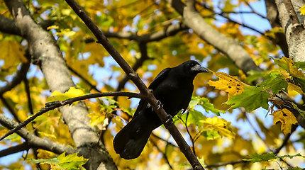 Pasipiktinus ornitologams Vilniaus savivaldybė ramina: medžiai Sapiegų parke iki liepos 1-osios nebus kertami